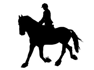 Silhouette of Female Rider on Lipizzaner horse
