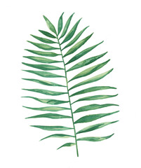 Watercolor Tropical Palm Frond Leaves Painting