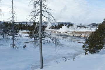 Dead Tree, Winter, Yellowstone NP