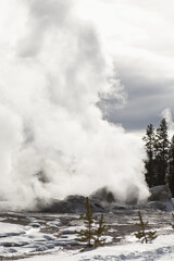 Winter, Upper Geyser Basin, Yellowstone NP