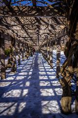 Central Park Grape Garden