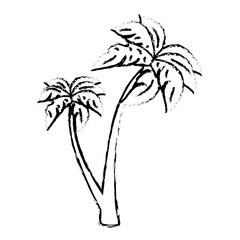tree palm beach isolated icon vector illustration design