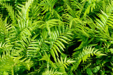 fern leaf pattern nature