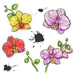 hand drawn set illustrations of color orchid on white background. sketch. vector eps 8