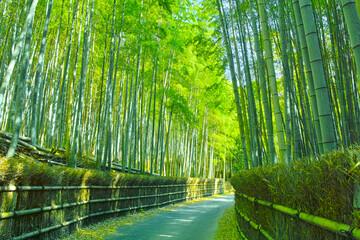 Tuinposter Kyoto 京都 竹林と小道