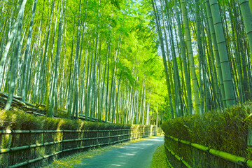Poster Kyoto 京都 竹林と小道