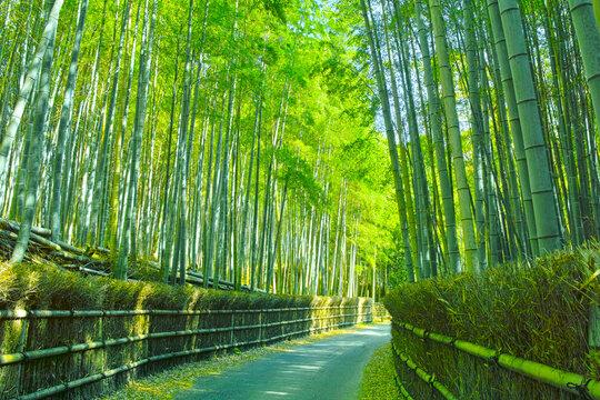 京都 竹林と小道