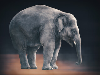 Giant Elephant portrait artwork