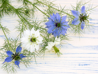 Love-in-a-mist flowers on a white wooden board