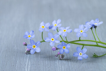 Blue flowers on a wooden table. Background