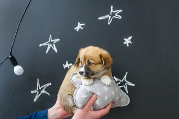 Puppy in hands on star picture background