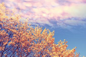 autumn background blurred branch orange