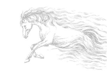 Running horse, line drawing, gray pencil sketch. vector illustration.