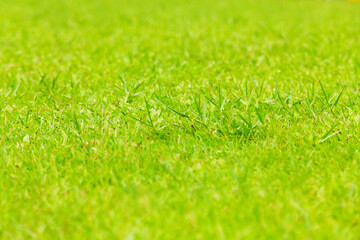 Aerial view of Natural green grass texture, Aerial view of park