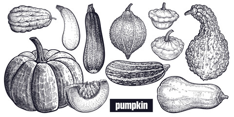 Various of Pumpkin. Chayote, Squash, Zucchini, Hubbard squash, Bush pumpkin, Crookneck, Butternut. Hand drawing. Vector art illustration. Black and white. Vintage engraving vegetables. Kitchen design