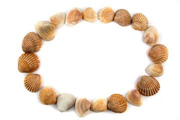 Oval frame of seashells isolated on white