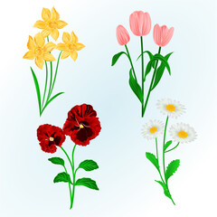 Spring flowers Daffodils ,Pansies,Tulips and daisies vintage hand draw vector botanical illustration for design