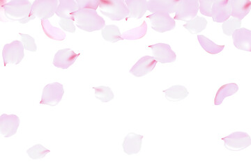 Falling rose petals soft delicate pink blossom. Sakura cherry flying flowers. 3d realistic design. Vector illustration