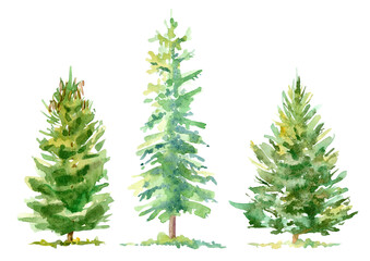 Spruce border.Coniferous forest.Watercolor hand drawn illustration.White background.