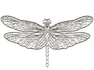 Vector coloring Dragonfly insect for adults