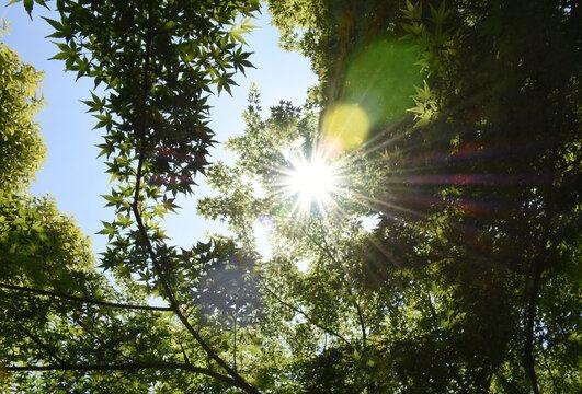 新緑と眩しい太陽と青空(青春、夢、成功、紫外線、熱中症、暑い、日射しなどのイメージ)