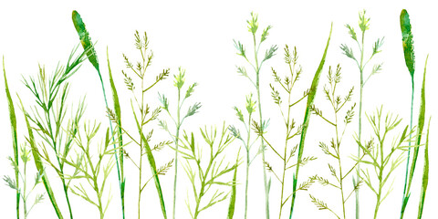 Field herb. Bluegrass and timothy grass border. Watercolor hand drawn illustration.white background.