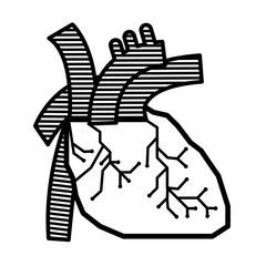 Heart line anatomy vector design for science