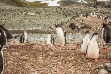 Колонии пингвинов.
