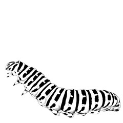 the caterpillar crawls, sketch vector graphics black and white drawing