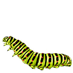 green caterpillar creeps, sketch vector graphics color picture