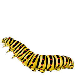 yellow caterpillar crawling, sketch vector graphics color picture