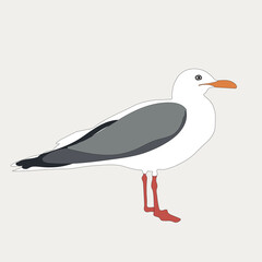 Seagull isolated on a background. Vector illustration bird.