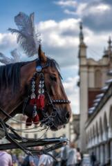 Horses and Cracow ( kraków , krakow , poland , europe )