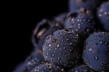 Aluminium Prints Macro photography grape vines isolated , water drops ,macro shot , black background , ideal grapes bunch , closeup