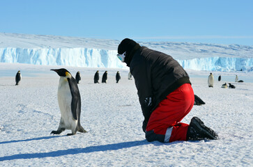 Emperor penguin chick and the man in the red suit.Close-up