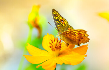Butterfly feed on nectar from flowers in the morning