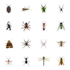 Realistic Locust, Wisp, Damselfly And Other Vector Elements. Set Of Insect Realistic Symbols Also Includes Bee, Emmet, Insect Objects.