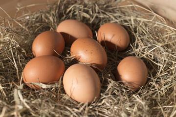 Brown chicken eggs in straw nest