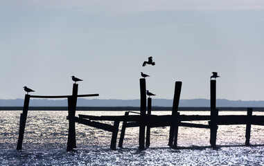 Silhouette of Seagulls on Old Pier