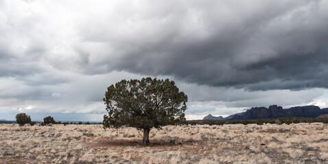 Lone tree, moody storm