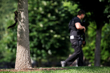 A squirrel hangs out on a nearby tree as a Secret Service counter-assault team member keeps watch during a potential security threat on the North Lawn of the White House in Washington