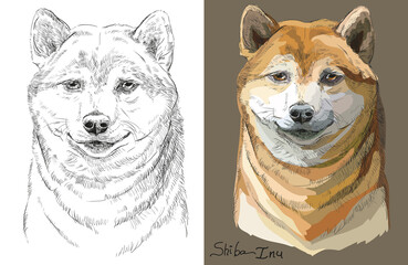 Colored and black and white Shiba Inu vector portrait