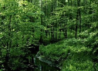 Summer forest, Helsinki Central park, Finland