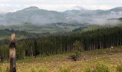 Foggy Mountain Clearcut Logging Effect Tree Stumps Deforestation