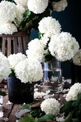 Schneeball Blüten Florist