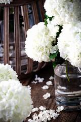 Schneeball Blüten Florist CloseUp