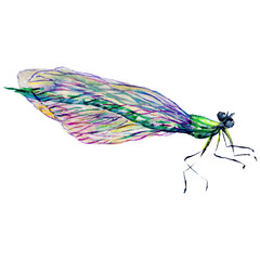 Insect dragonfly in a watercolor style isolated.