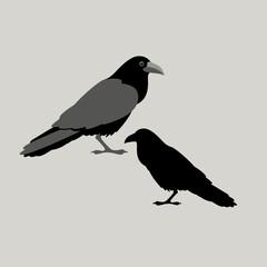 raven bird vector illustration style Flat