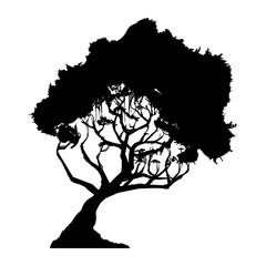 Beautiful tree silhouette icon vector illustration graphic design