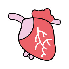 heart organ with blood circulation for the veins